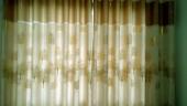 烫金万博体育manbetx3.0系列01—发财树